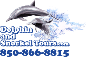 Dolphin and Snorkel Tours Boat Cruises