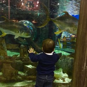 Bass Pro Shops Aquarium