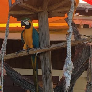 Sandestin Golf and Beach Resort: Mary Ann the Macaw