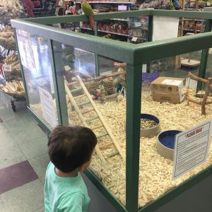 Petland Fort Walton Beach: Animal Encounters