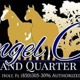 Angel Oaks Paint and Quarter Horses: Riding Lessons