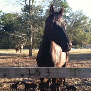 Center Line Acres: Horseback Riding Lessons