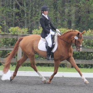 Dream Acres Sport Horses: Equestrian Training